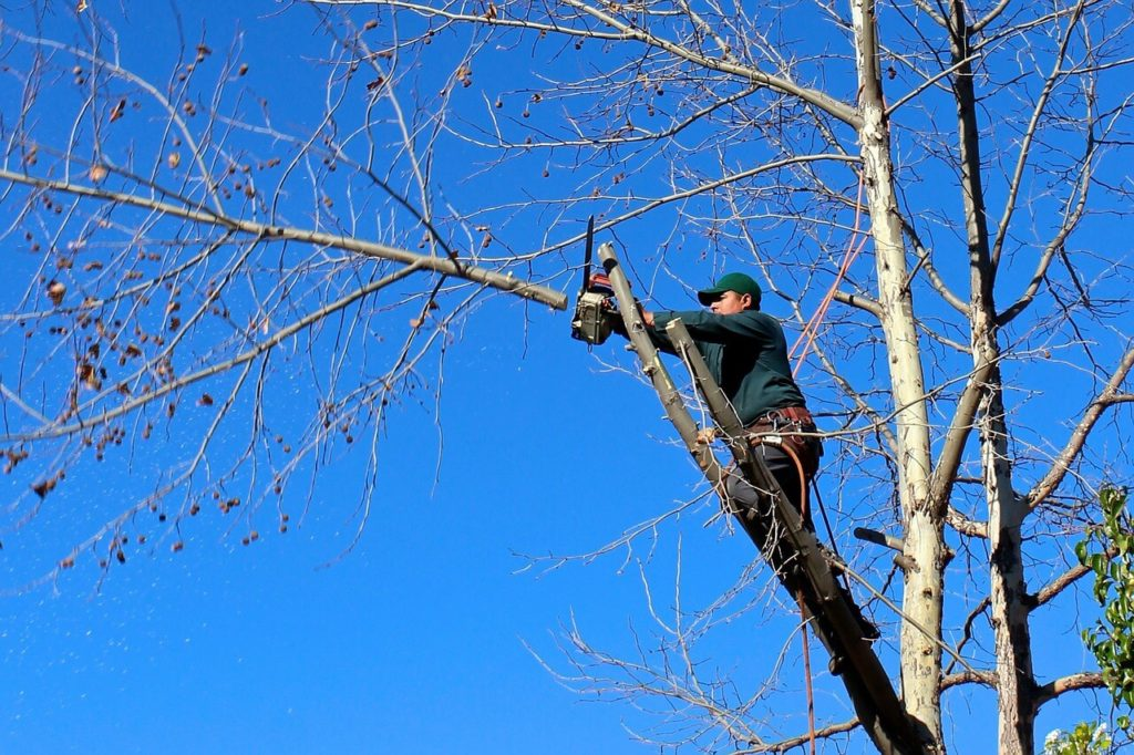 Contact Us-Bloomingdale FL Tree Trimming and Stump Grinding Services-We Offer Tree Trimming Services, Tree Removal, Tree Pruning, Tree Cutting, Residential and Commercial Tree Trimming Services, Storm Damage, Emergency Tree Removal, Land Clearing, Tree Companies, Tree Care Service, Stump Grinding, and we're the Best Tree Trimming Company Near You Guaranteed!