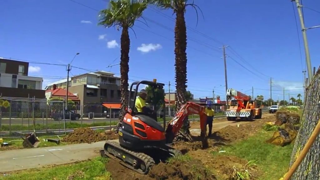 Palm Tree Removal-Bloomingdale FL Tree Trimming and Stump Grinding Services-We Offer Tree Trimming Services, Tree Removal, Tree Pruning, Tree Cutting, Residential and Commercial Tree Trimming Services, Storm Damage, Emergency Tree Removal, Land Clearing, Tree Companies, Tree Care Service, Stump Grinding, and we're the Best Tree Trimming Company Near You Guaranteed!