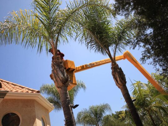 Palm Tree Trimming-Bloomingdale FL Tree Trimming and Stump Grinding Services-We Offer Tree Trimming Services, Tree Removal, Tree Pruning, Tree Cutting, Residential and Commercial Tree Trimming Services, Storm Damage, Emergency Tree Removal, Land Clearing, Tree Companies, Tree Care Service, Stump Grinding, and we're the Best Tree Trimming Company Near You Guaranteed!