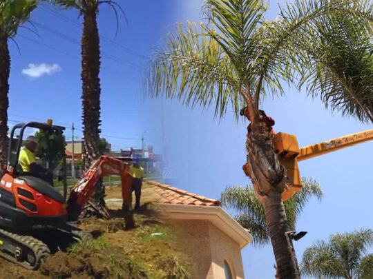 Palm tree trimming & palm tree removal-Bloomingdale FL Tree Trimming and Stump Grinding Services-We Offer Tree Trimming Services, Tree Removal, Tree Pruning, Tree Cutting, Residential and Commercial Tree Trimming Services, Storm Damage, Emergency Tree Removal, Land Clearing, Tree Companies, Tree Care Service, Stump Grinding, and we're the Best Tree Trimming Company Near You Guaranteed!