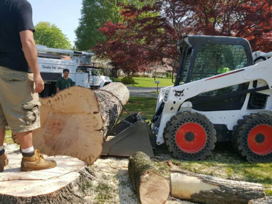 Services-Bloomingdale FL Tree Trimming and Stump Grinding Services-We Offer Tree Trimming Services, Tree Removal, Tree Pruning, Tree Cutting, Residential and Commercial Tree Trimming Services, Storm Damage, Emergency Tree Removal, Land Clearing, Tree Companies, Tree Care Service, Stump Grinding, and we're the Best Tree Trimming Company Near You Guaranteed!