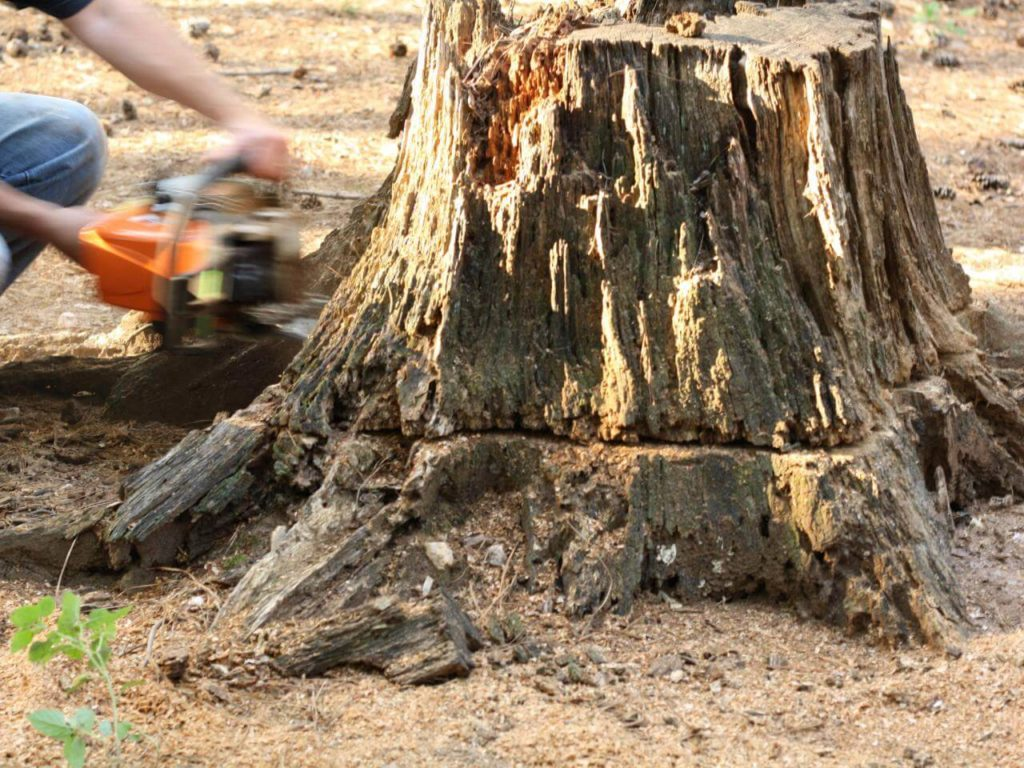 Stump Removal-Bloomingdale FL Tree Trimming and Stump Grinding Services-We Offer Tree Trimming Services, Tree Removal, Tree Pruning, Tree Cutting, Residential and Commercial Tree Trimming Services, Storm Damage, Emergency Tree Removal, Land Clearing, Tree Companies, Tree Care Service, Stump Grinding, and we're the Best Tree Trimming Company Near You Guaranteed!