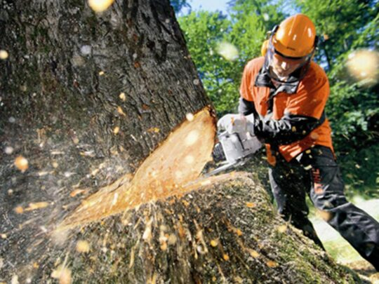 Tree Cutting-Bloomingdale FL Tree Trimming and Stump Grinding Services-We Offer Tree Trimming Services, Tree Removal, Tree Pruning, Tree Cutting, Residential and Commercial Tree Trimming Services, Storm Damage, Emergency Tree Removal, Land Clearing, Tree Companies, Tree Care Service, Stump Grinding, and we're the Best Tree Trimming Company Near You Guaranteed!