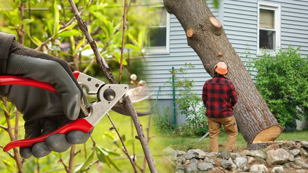 Tree pruning & tree removal-Bloomingdale FL Tree Trimming and Stump Grinding Services-We Offer Tree Trimming Services, Tree Removal, Tree Pruning, Tree Cutting, Residential and Commercial Tree Trimming Services, Storm Damage, Emergency Tree Removal, Land Clearing, Tree Companies, Tree Care Service, Stump Grinding, and we're the Best Tree Trimming Company Near You Guaranteed!